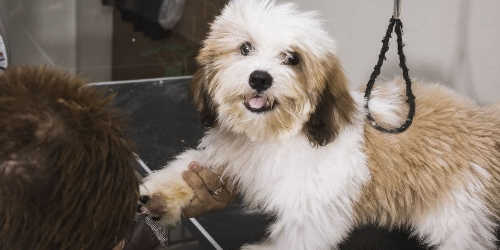 Puppy Program Home Page